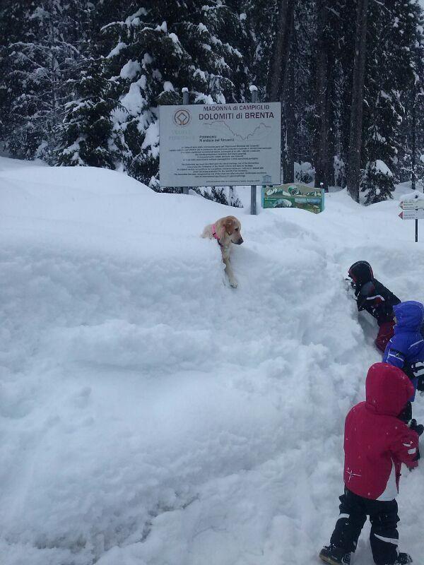 Ultima nevicata del 4 gennaio 2014